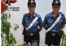 Mazara. La droga nascosta nel soggiorno scoperta da Mike e dai Carabinieri: Un arresto e una denuncia