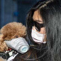 Cane testato positivo per coronavirus. Il cane di una donna infetta dal coronavirus è stato messo in quarantena a Hong Kong