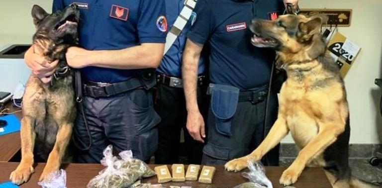 Sorpreso un uomo in una palazzina abbandonata e i cani Ron e Mike trovano droga: arrestato 41enne