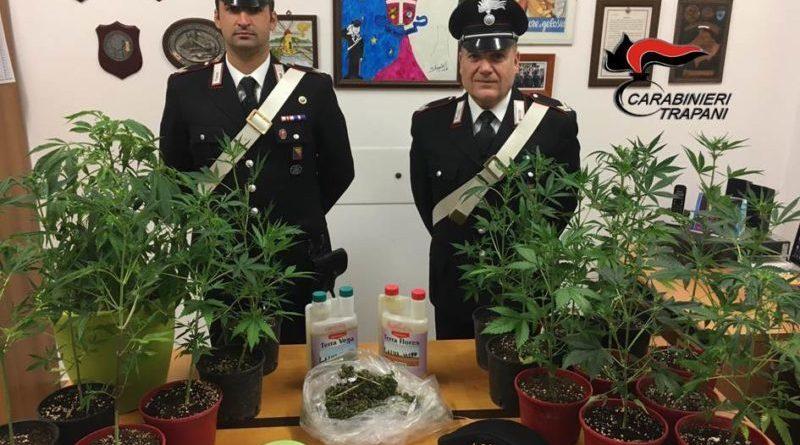 Petrosino. Arrestato 55enne dal pollice verde: coltivava marijuana in giardino