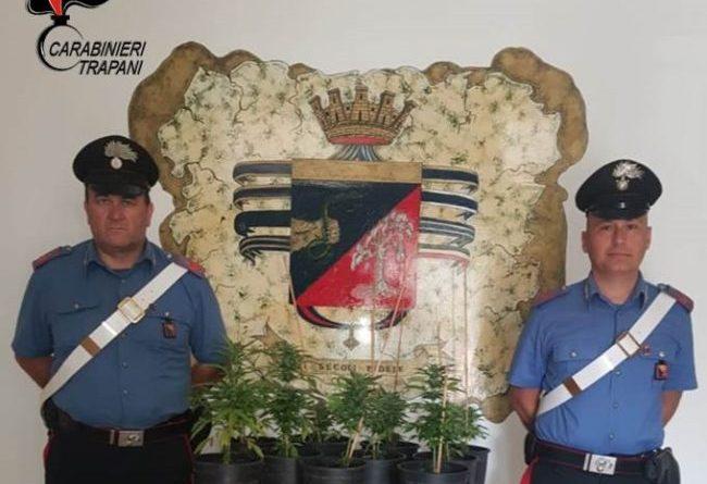 Marsala. Coltivazione non autorizzata di marijuana: arrestato pregiudicato
