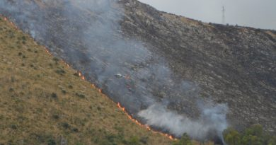 WWF: domenica a Monte Cofano per dire NO agli incendi dolosi
