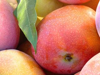 Compra mango Keitt en nuestra frutería online