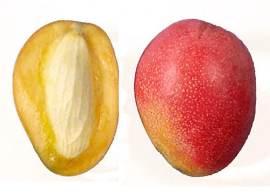 Propiedades del mango Irwin