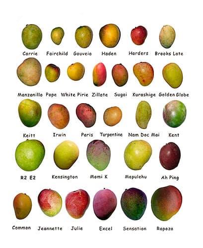 Las propiedades del mango están representadas en cualquiera de sus variedades