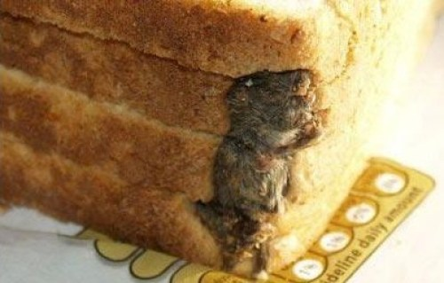 mouse-baked-in-bread (2)
