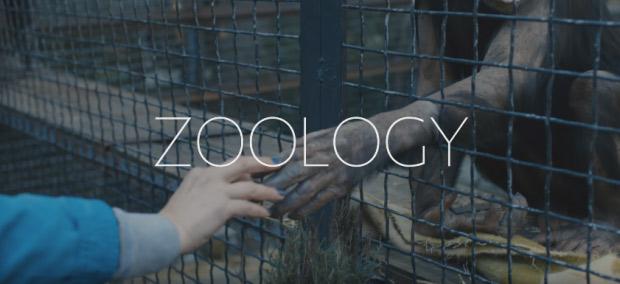 Zoology-PIFF-2017
