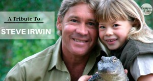 A-Tribute-To-Steve-Irwin