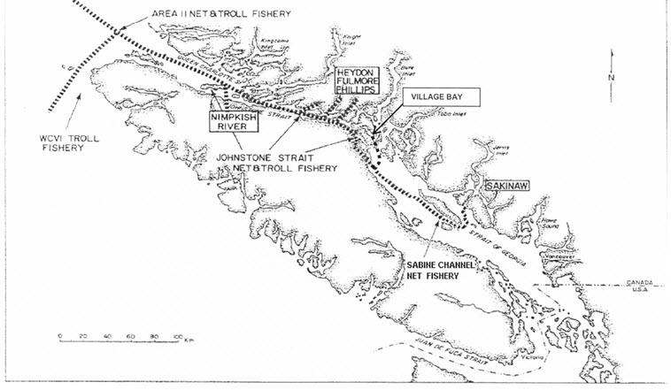 Sockeye salmon (Oncorhynchus nerka) Sakinaw population