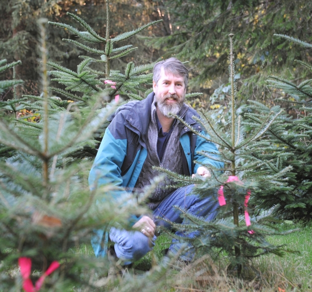 Real Christmas trees more sustainable than fakes, forestry professor says