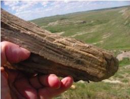 Grasslands Fossil