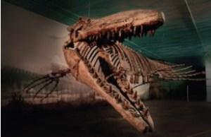 Manitoba Bruce Fossil