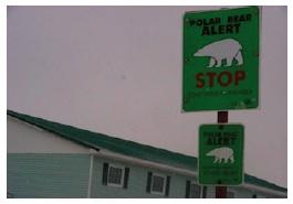Street Sign Polar Bear