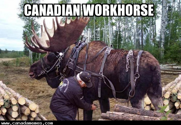 🇨🇦 Canadian Workhorse