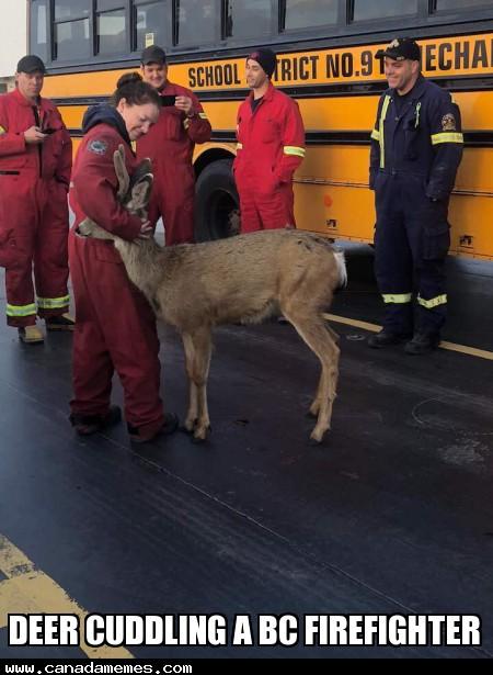🇨🇦 Deer cuddling a BC firefighter