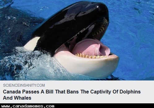 🇨🇦 Canada Passes Bill to Ban Captivity of Dolphins and Whales  *NOT A DAY TOO SOON!*