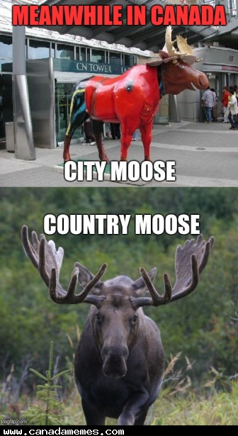 🇨🇦 City Moose Country Moose