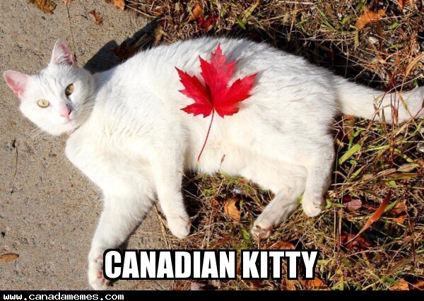 🇨🇦 Canadian Kitty