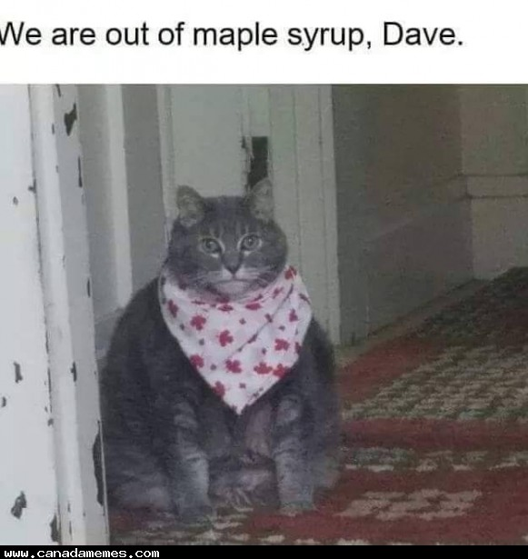 🇨🇦 We are out of maple syrup, Dave