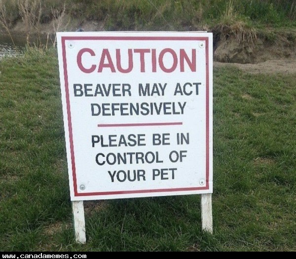 🇨🇦 Caution: Angry beaver!