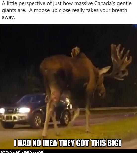 🇨🇦 I had no idea they got THIS big!