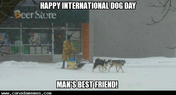🇨🇦 Happy International Dog Day