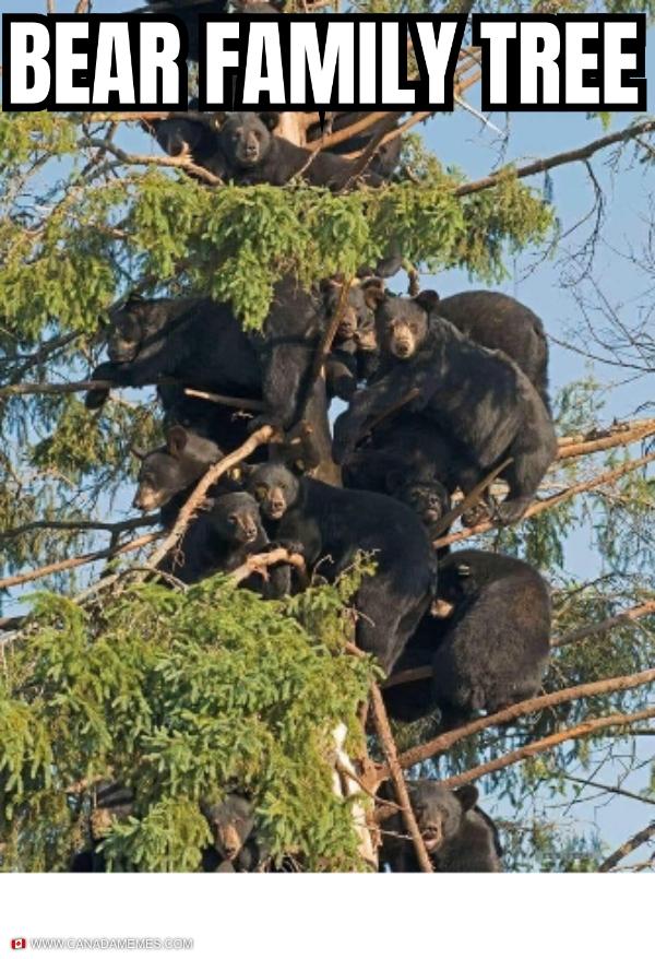 Bear Family Tree
