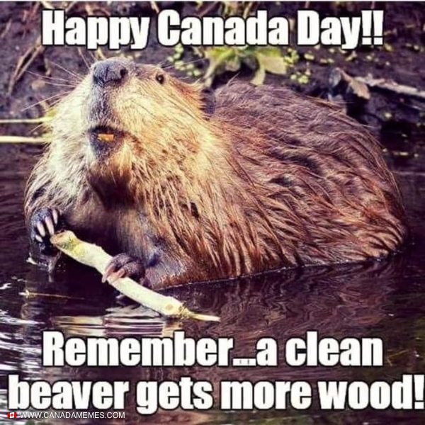 Remember, a clean beaver gets more wood!