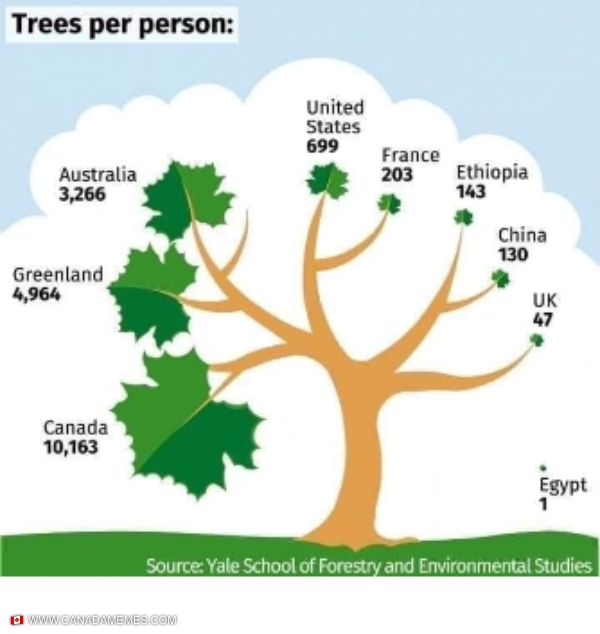 Canada has more trees per person than any other country!