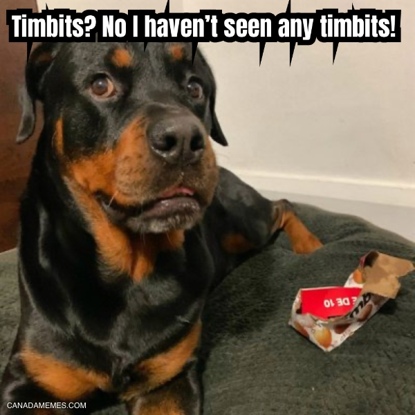 Timbits? No I haven't seen any timbits!