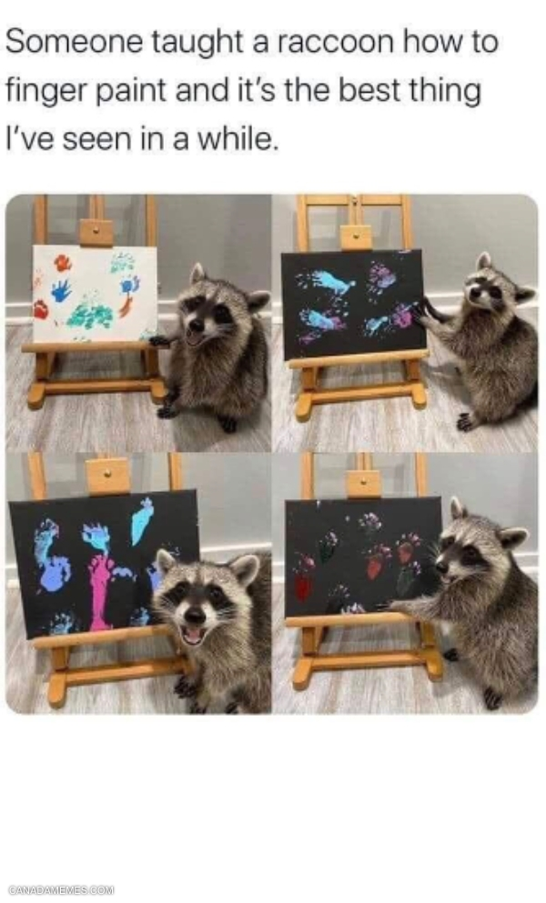 Here's a raccoon finger painting to brighten up your day