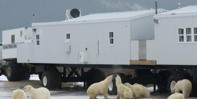 Polar Bear Safari, Churchill, Manitoba