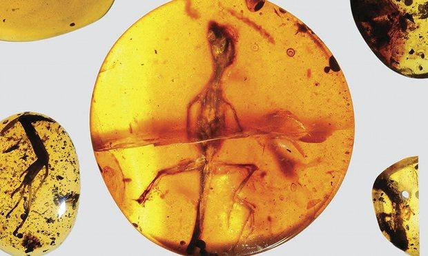 [A photo of an intact specimen of a small lizard, encased in an orb of amber.]