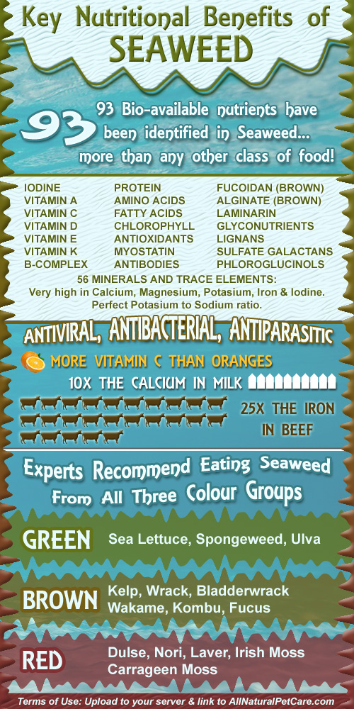 Mix Seaweed Species for Maximum Benefits Infographic