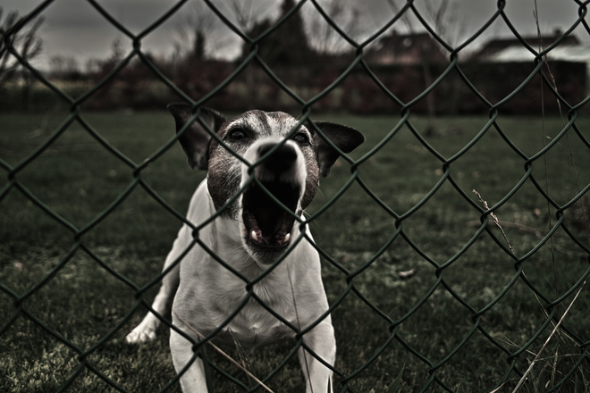 dog-eat-dog-2-2-1245209 2