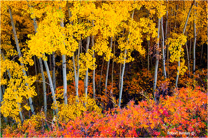 Fall Painting Wallpapers Adobe Photoshop Cs6 What S New Amp First Impressions The