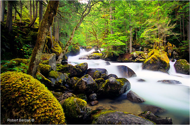 The Carmanah Valley an Ancient Rainforest on Vancouver