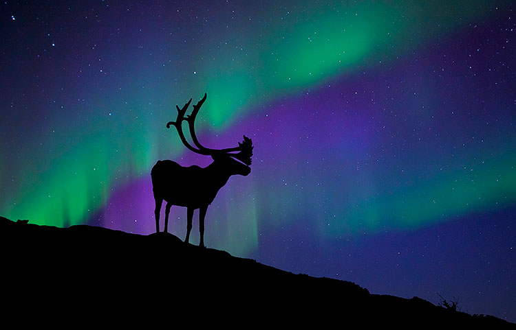 Northern Lights Ontario