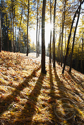 Fall colour photography along the Bow Valley Parkway in Banff National Park
