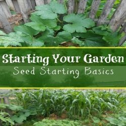 Gardening – Starting your Vegetables from Seed