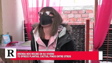Photo of Redacción Noticias |  Emprendimientos locales: Brenda nos presenta su vivero en el hogar
