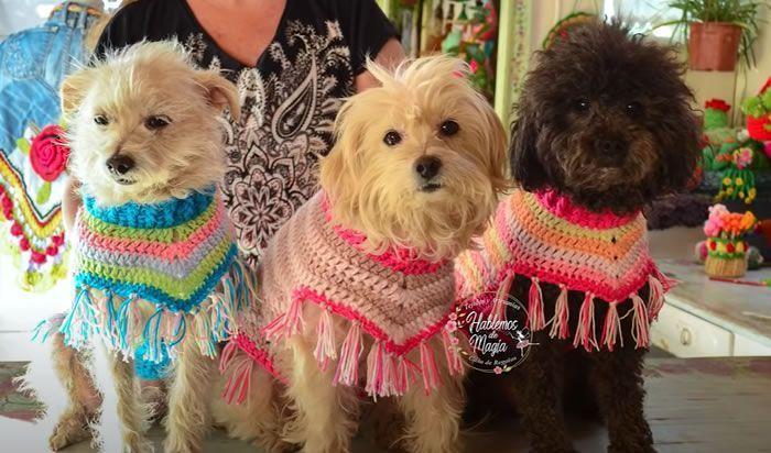 Poncho a crochet para mascotas