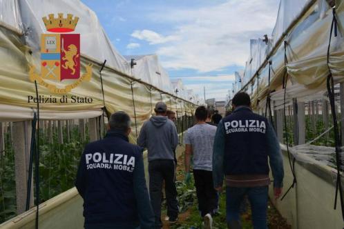 Piantagione droga in case, sei arresti