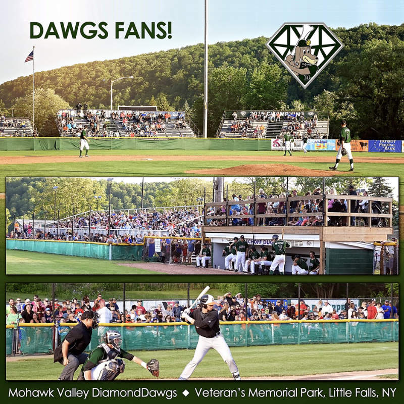 Diamond Dawgs Baseball