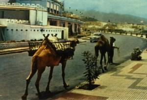 Lazaro y sus camellos