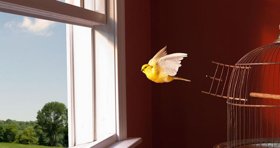 Canary Birds Exercise