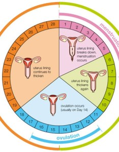 Fertility cycle chart also when hormones cause miscarriages and female infertility canaryclub rh