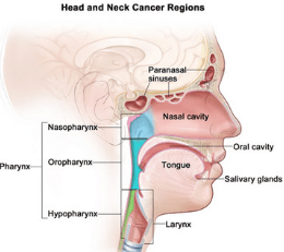 High-risk HPV types can cause several cancers, including oropharyngeal cancer