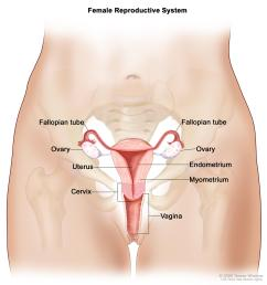 dictionary of cancer terms female body outline outer body diagram female [ 3000 x 3150 Pixel ]
