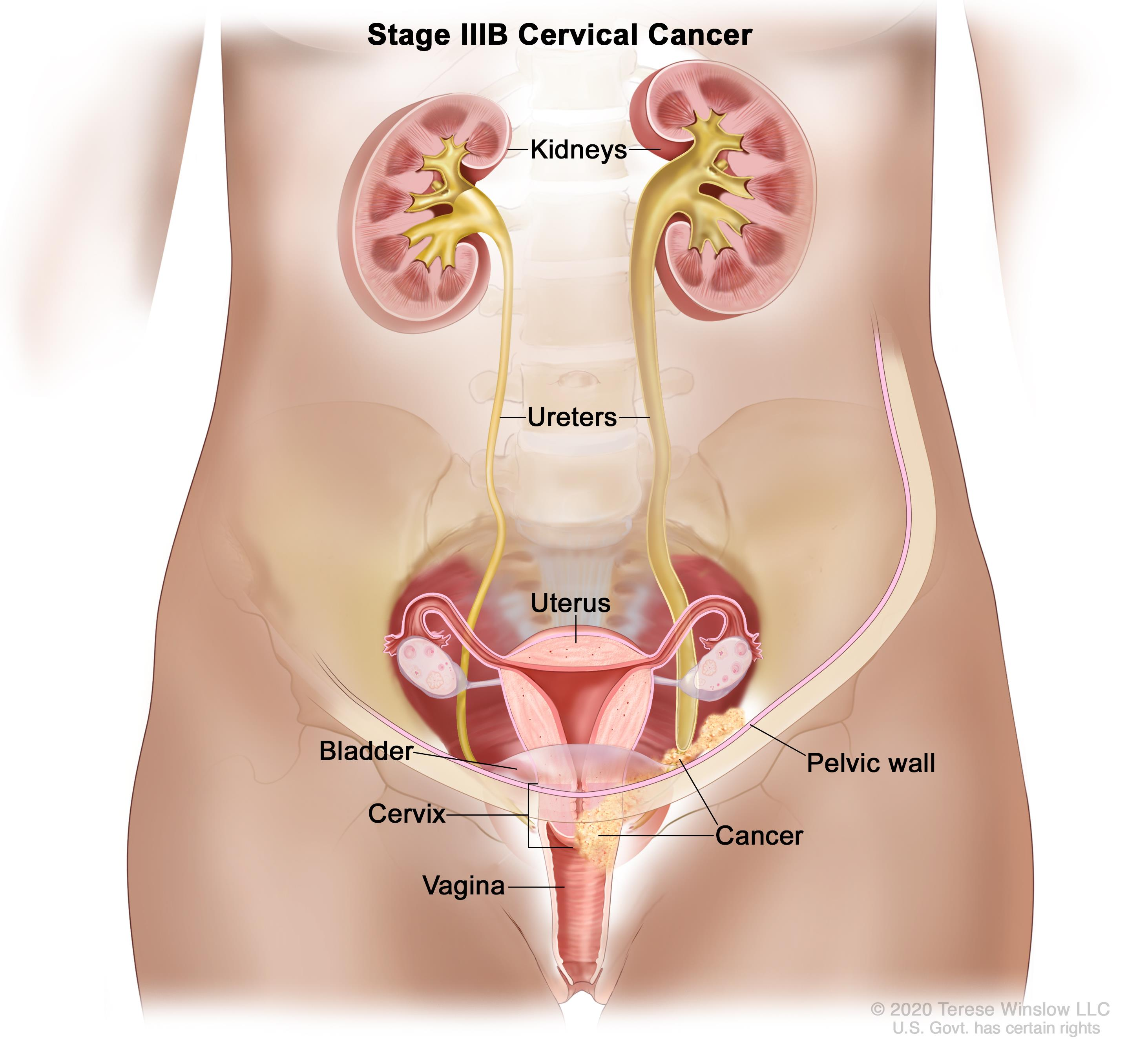 where is my liver located diagram g body wiring pancreas location in woman get free image about